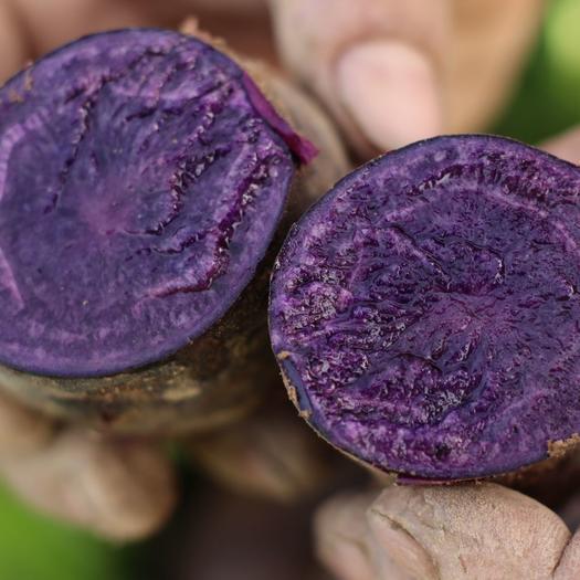 黑美人土豆  黑金刚土豆,黑土豆,彩色马铃薯