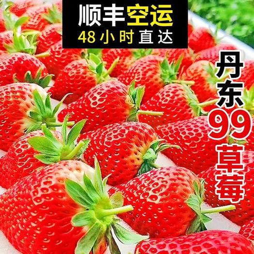 紅顏草莓  遼寧東港特產草莓基地一件代發塑料盒12粒,15粒,20粒等等