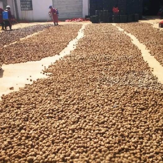 魔芋种子  一代种二代种全程提供技术指导签合同保证上门回收。