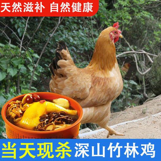 包邮正宗2年土鸡农家现杀散养黄油老母鸡草鸡整鸡柴鸡带心肝胗