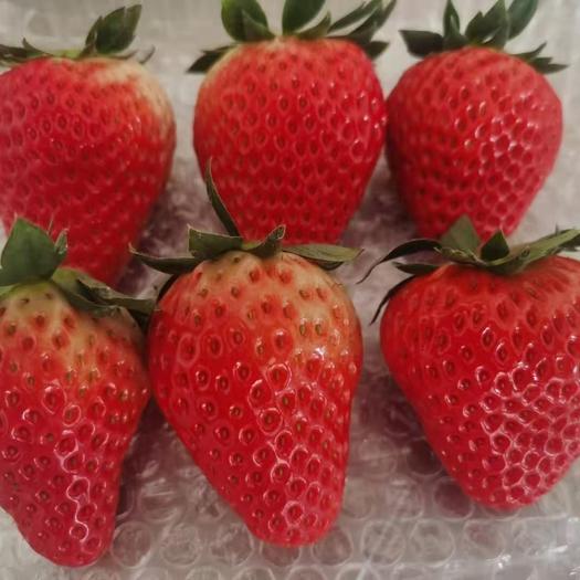 顺丰空运包邮 丹东99草莓红颜草莓3斤中大果支持代发