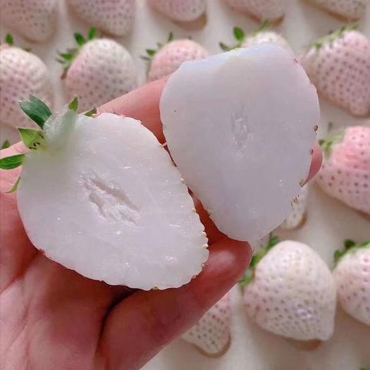 淡雪草莓 白色天使小町链接 一件代发 批发 顺丰航空 空配