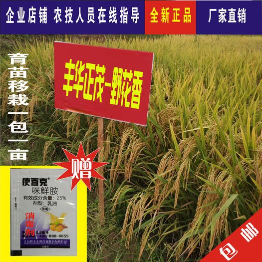 水稻种子  抗倒抗病米饭清香优质长粒米水稻杂交种子高产谷种稻谷