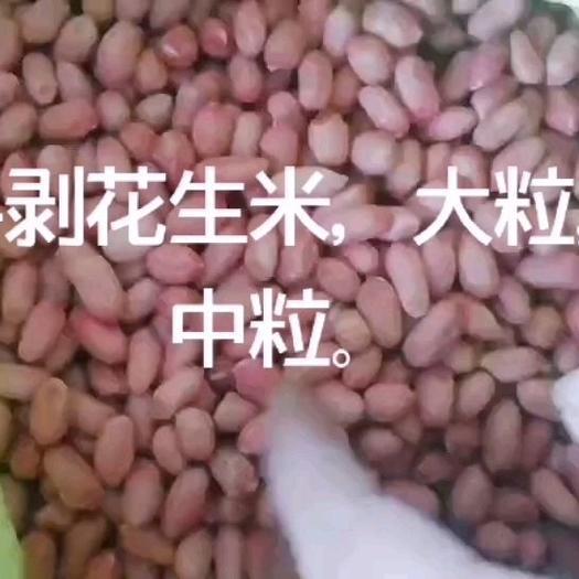 油料花生米  花生芽手剥花生米,9616,花育16,花育25