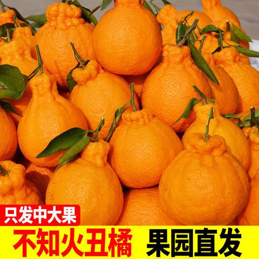 【现摘现发】四川不知火丑橘10斤丑八怪橘子丑柑丑桔水果批发包