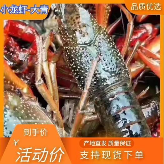 两虾 泡头虾潜江市精品清水镇小龙虾,规格齐全,底板干净,肉质保满