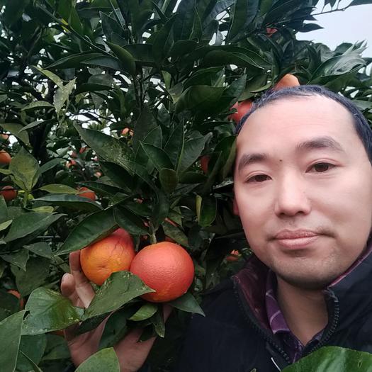 塔罗科血橙  四川丹棱应季水果血橙农户直发包邮