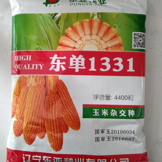 东单1331玉米种子  国审品种东单1331,青农11,综合抗性好,产量高,生虫少。