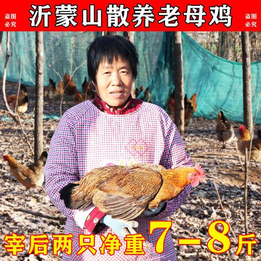 土鸡  【2年老母鸡】电商一件代发   社区团购    顺丰包邮
