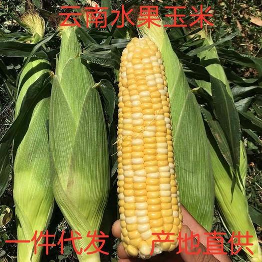 云南水果玉米甜玉米爆浆玉米可生吃金银玉米