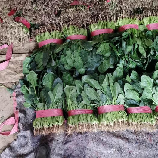 邯郸市丛台区主营大叶菠菜,可供超市,加工厂,需要的联系我