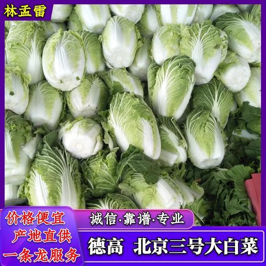 聊城黄心大白菜,大棚白菜,质量好价格便宜
