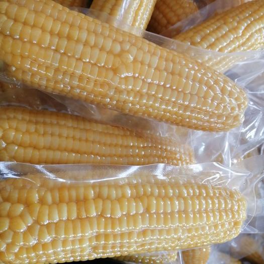 東北糯玉米