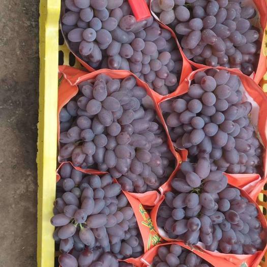 北镇茉莉香葡萄,大棚葡萄大量上市了,质量好价格便宜货源充足
