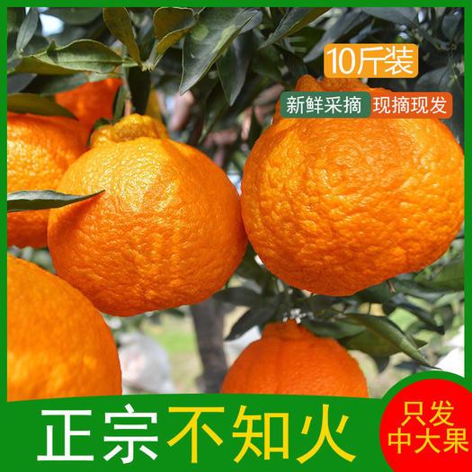 四川不知火丑橘10斤装 当季水果耙耙柑整箱包邮