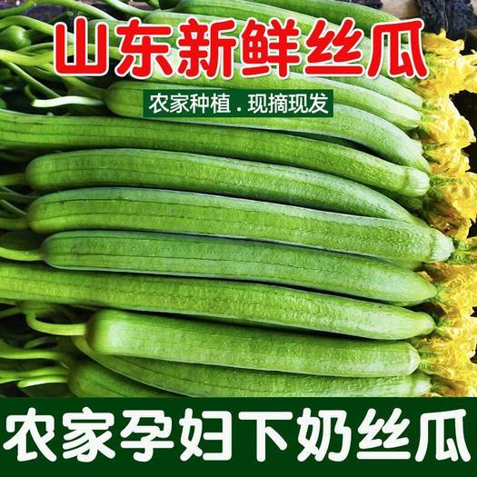 肉丝瓜  新鲜丝瓜胜瓜山东农家菜寿光5斤3斤棱丝瓜批发孕妇辅食蔬菜