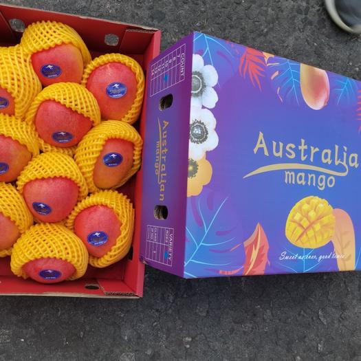 澳洲彩色芒果R2E2 11斤巨无霸一级果大澳芒货源批发价供应