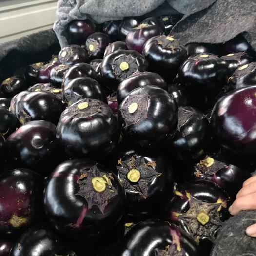 黑茄子,山东聊城紫光圆茄子大量供应中 真实报价,诚信合作!