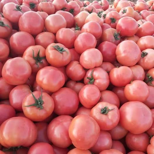 硬粉西红柿  精品西红柿,色泽靓丽,果型圆滑,商超,平台,首选。