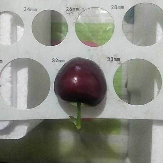 特大美早樱桃32-34mm;现摘现发,顺丰特快包邮
