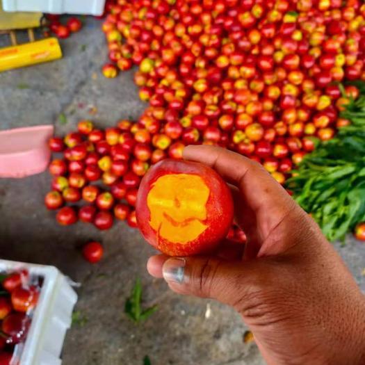 大棚油桃 126油桃 4号油桃 黄油 品种齐全 支持全国发货