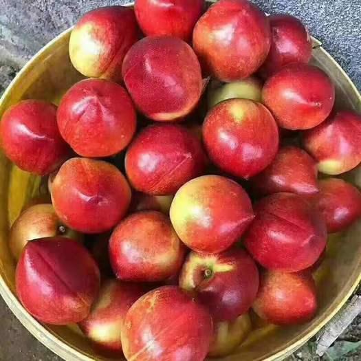 中油油桃  【油桃】山东油桃产地 中油4号油 126黄油桃 中油5号油桃