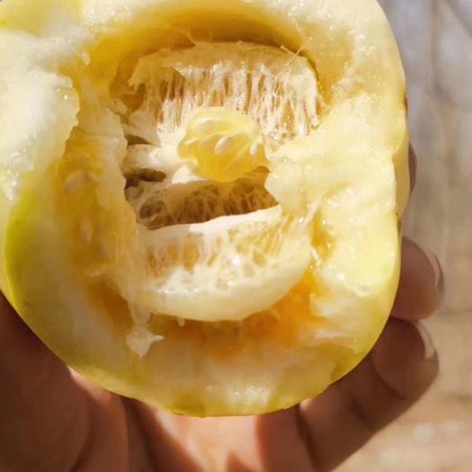 星甜甜瓜  小蜜蜂甜瓜,甜蜜如名,在这个吃瓜季,千万不能错过