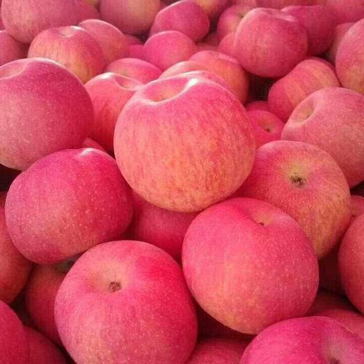 山东苹果 。冷库红富士苹果。 产地直销。一手货源