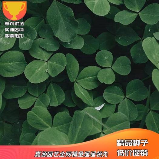 三叶草种子  白 红 四季青多年生草坪果园绿肥花种籽