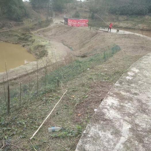 農場 一個養殖基地免費出租,交通便利水泥公路直達基地水源充足。