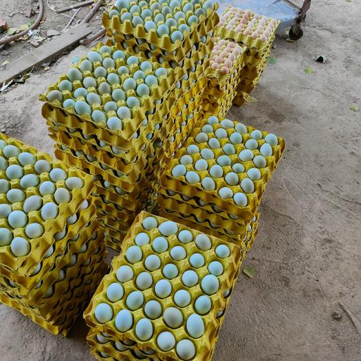 綠殼蛋  精品雙色,420枚裝凈重38左右