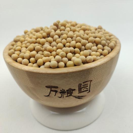 小黃豆 黃芽豆 生芽率高 菜黃豆 黃豆芽豆 質量好 價格美