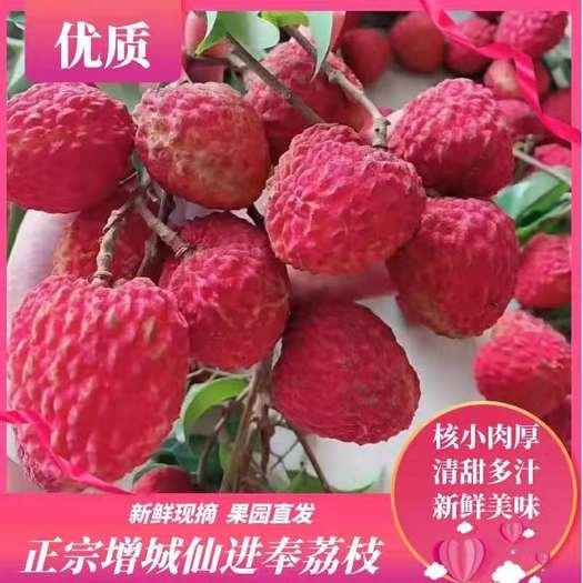 仙进奉荔枝  荔枝  增城 清甜多汁新鲜现摘