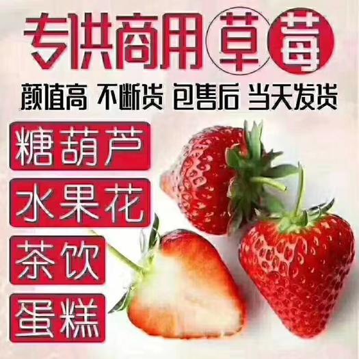 蒙特瑞草莓  云南會澤縣基地夏草莓2021年4月29日正式接單供貨,快聯系