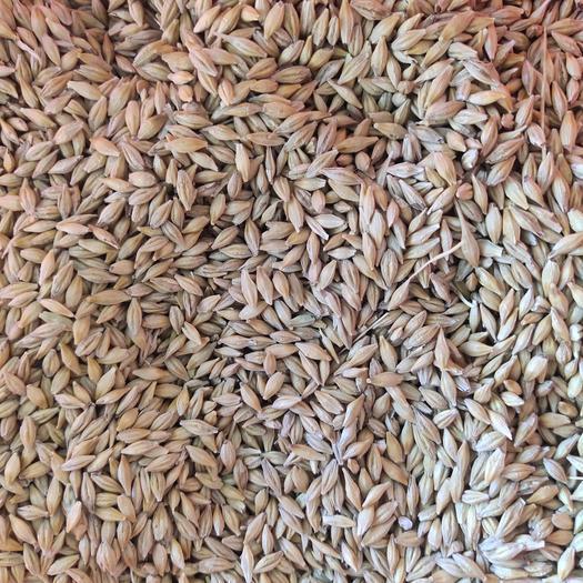 俄羅斯大麥!容重670水分13.8%粗蛋白10%雜質2%