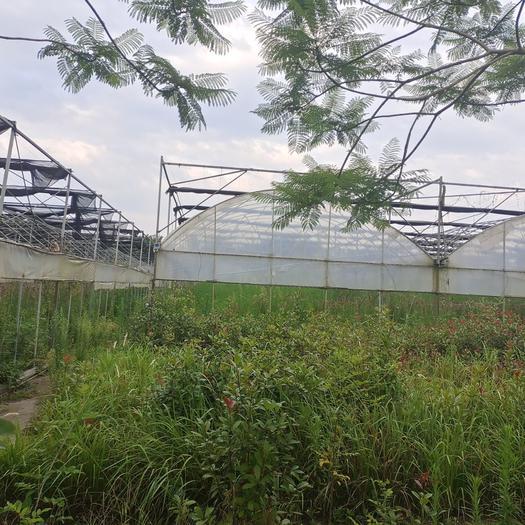 農場 400畝蔬菜基地,藥材基地出租