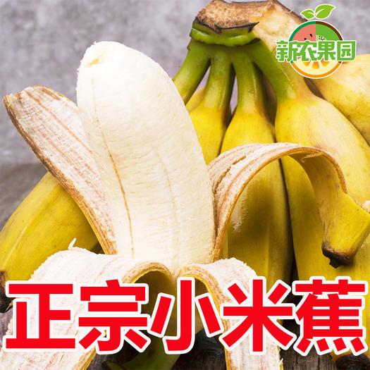 香蕉  正宗广西小米蕉新鲜粉蕉水果香焦小皇帝蕉自然熟banana包邮