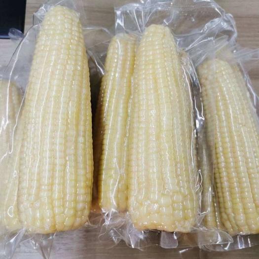 內蒙古甜糯玉米各種規格樣品