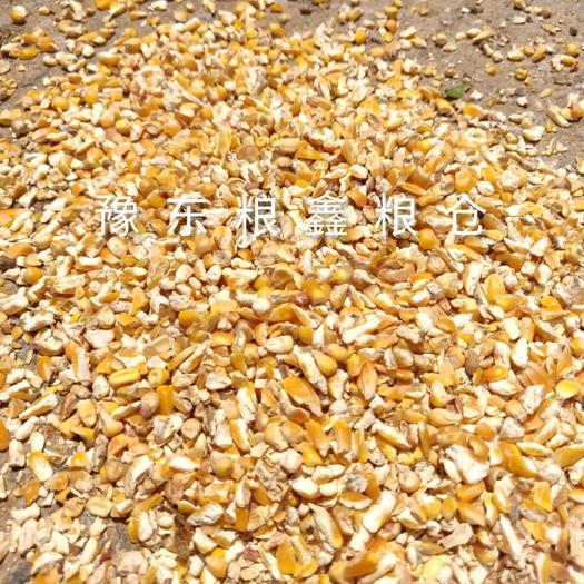 精選碎玉米,色選篩選料,水分14以內