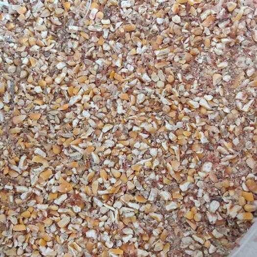 精選碎玉米,糧食含量85%,水分14霉變1