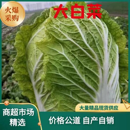 黄心大白菜。来自大山深处天然绿色。无虫眼。耐运输。