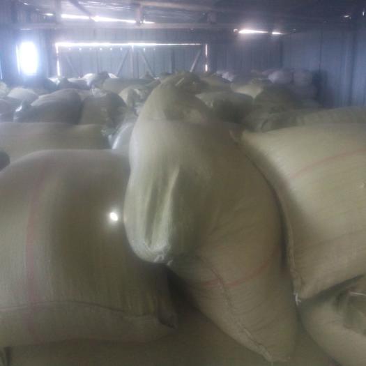 白麦  冬小麦,可磨面,做饲料 酿酒