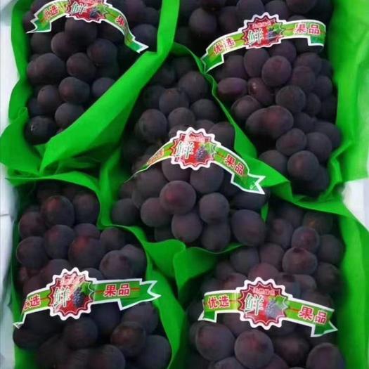 巨峰葡萄 北镇巨丰葡萄大粒大串,质量好,货源充足