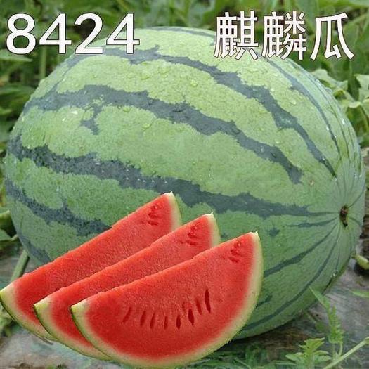 西瓜新鲜水果现摘现发甜西瓜冰糖麒麟瓜8424西瓜薄皮超甜水果