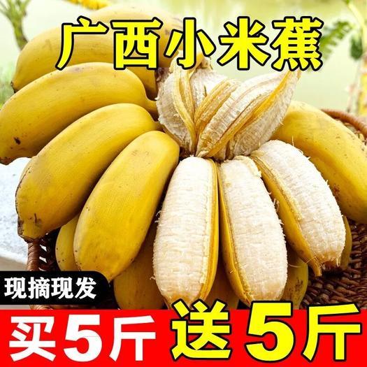【泡沫箱】广西小米蕉9斤当季新鲜水果包邮非香蕉皇帝焦