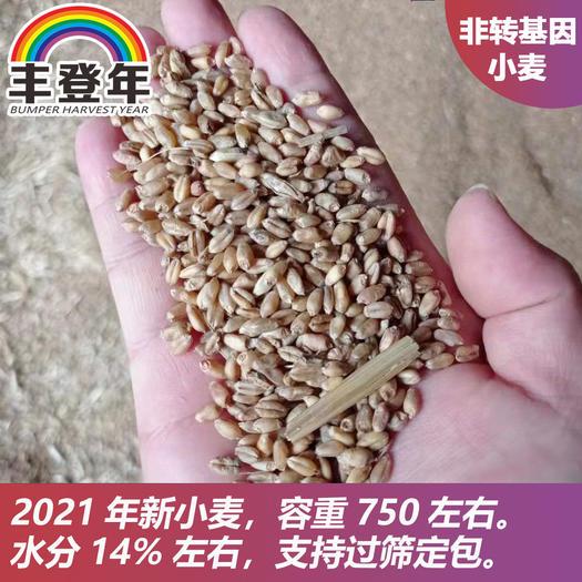 红麦  湖北省天门市小麦(新上市)直供