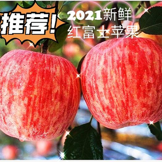 红富士苹果  山西现摘冰糖心苹果脆甜 一件代发 苹果批发