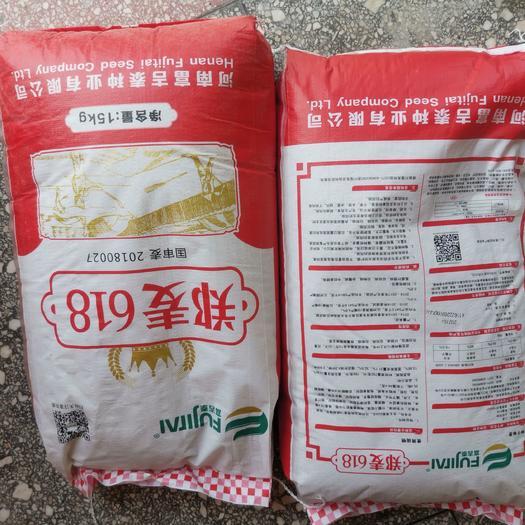 小麦种子优质高产小麦种籽郑麦618矮杆大穗抗倒抗病落黄好产量