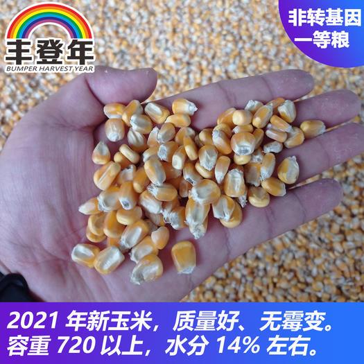 新上市干玉米产地直供(食用、饲料,成品粮)
