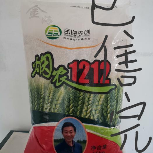 小麦种子  农业部主推品种,抗倒伏能力极好,熟相好,越冻抗寒性较好!